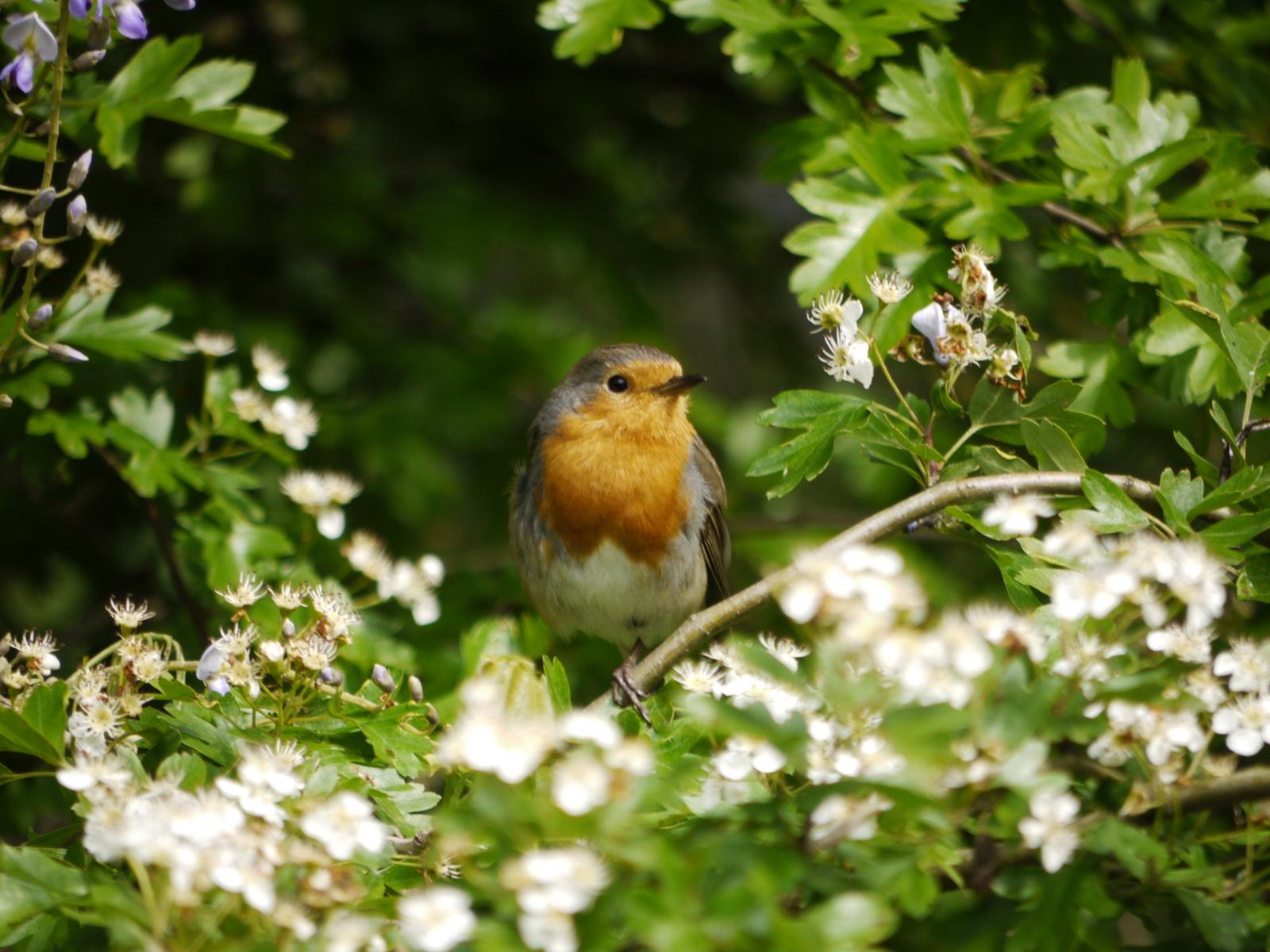 Doe mee aan de fotowedstijd 'Natuur in je buurt'!