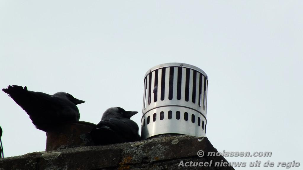 112 Kort: Brandweer redt vogel uit schoorsteenpijp in Assen