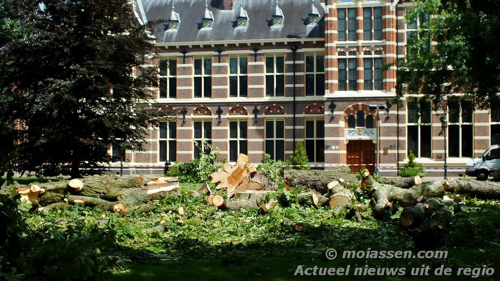 Grote kastanjeboom op de Brink voor het Drents Museum is gekapt