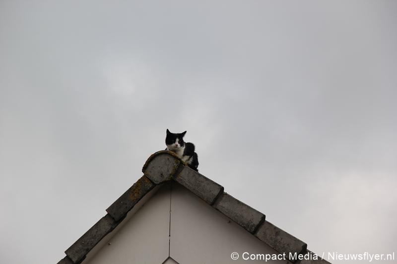 Brandweer haalt gewonde kat van dak