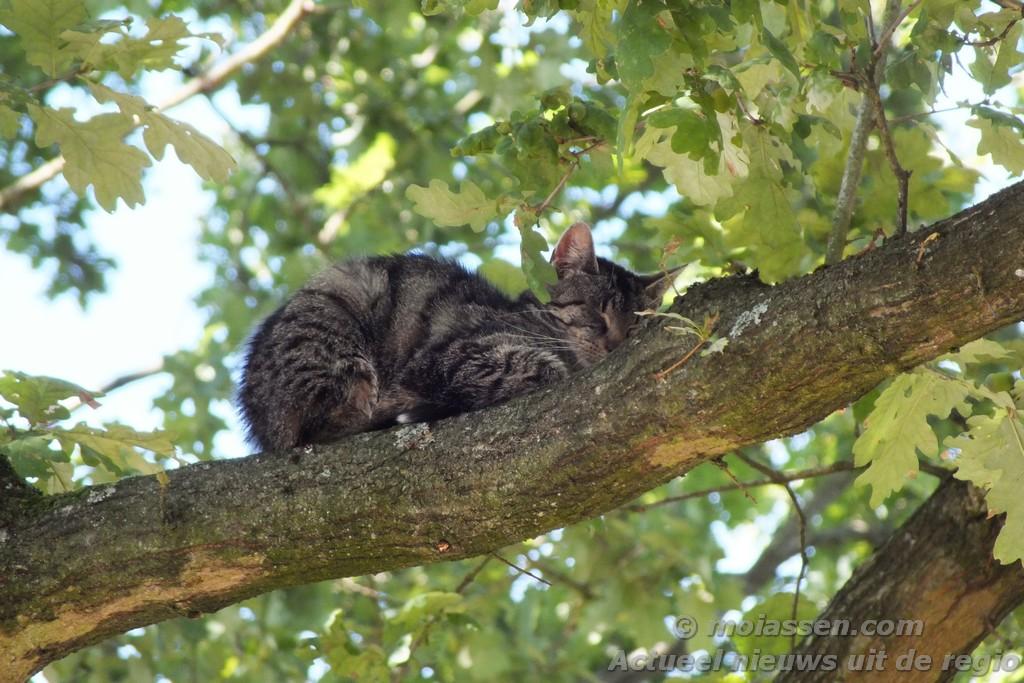 Dier op hoogte aan de Amelterhout in Assen