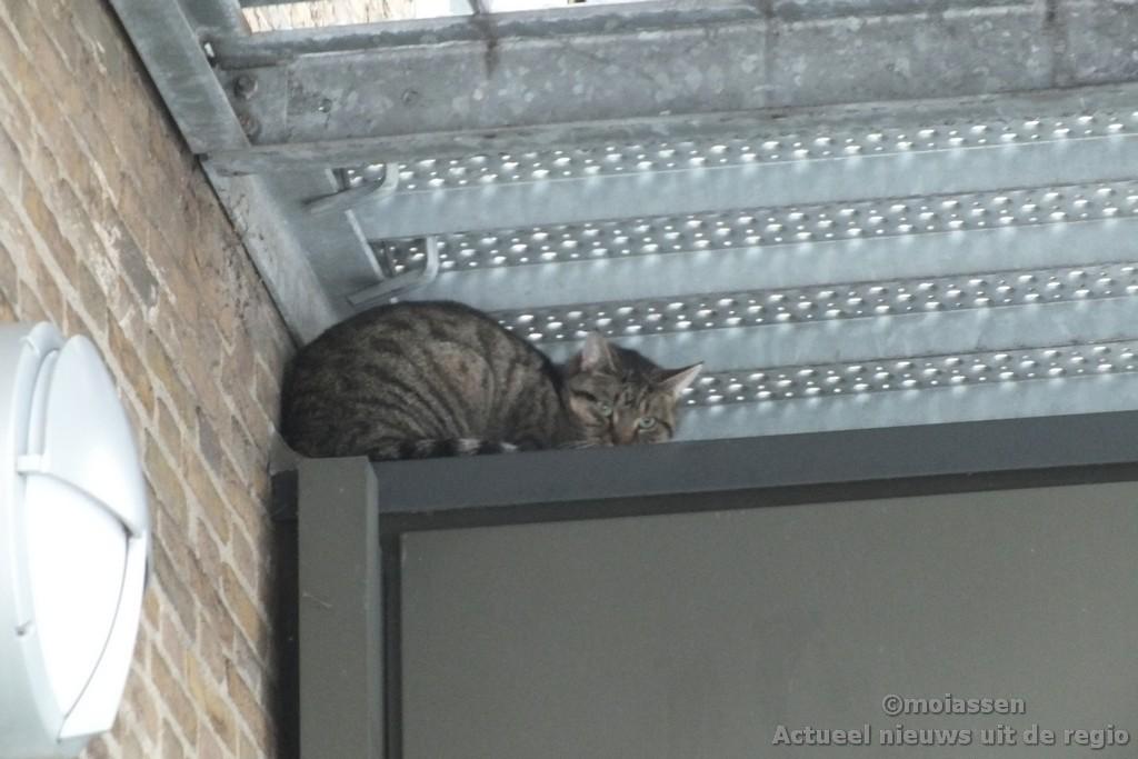 Kat in hogere sferen in Assen