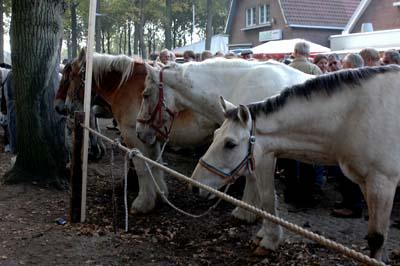 Minder aanvoer van paarden op voorjaarsmarkt Zuidlaren
