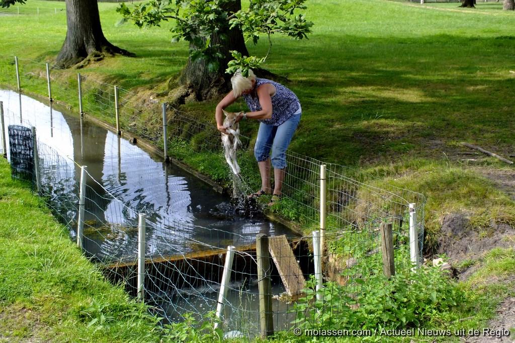 112Kort : Een toevallige voorbijgangster redt jong hertje uit het water.