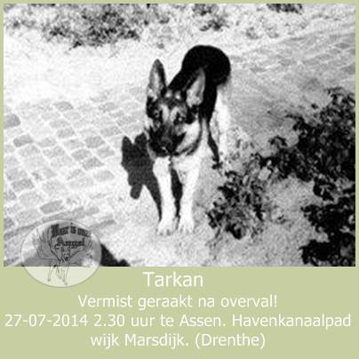 duizenden mensen in heel Nederland zoekt via internet naar gevluchte hond