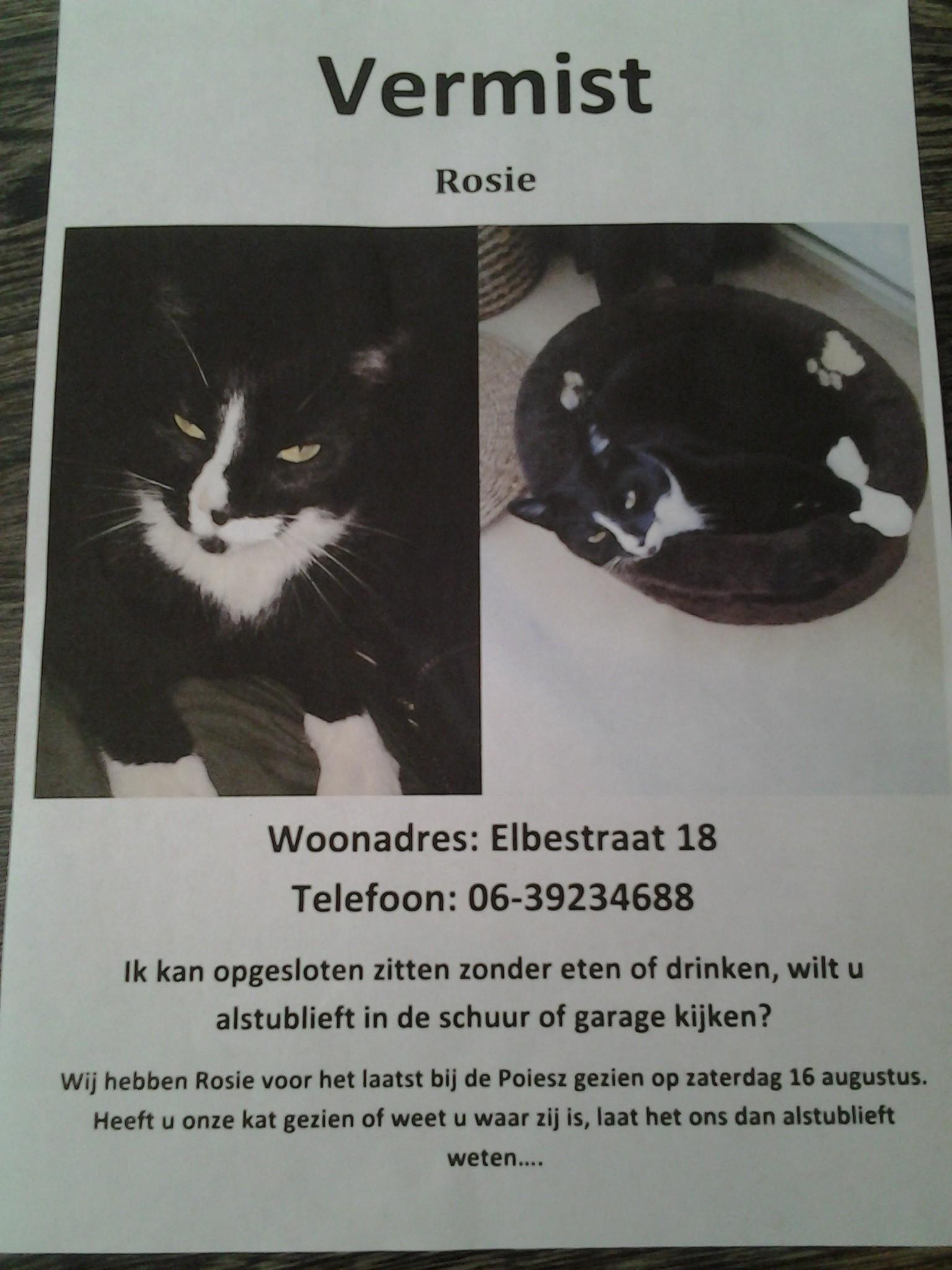 Rosie de kat vermist