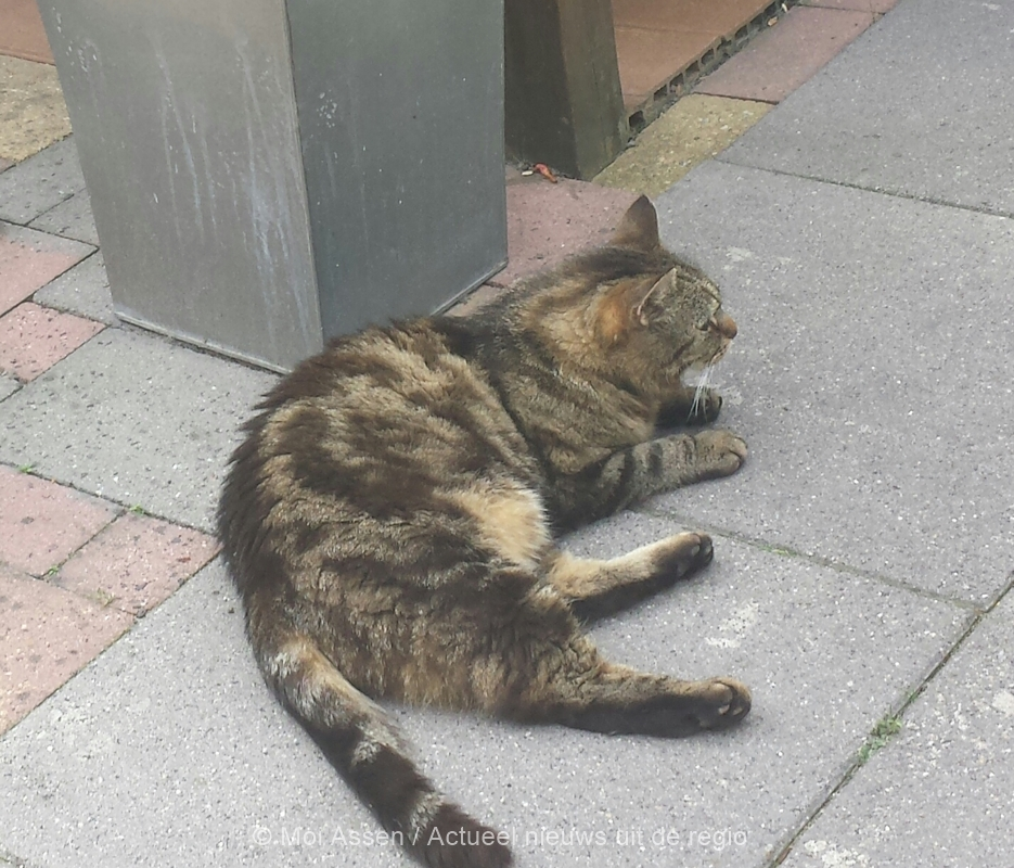 Kat vermist in Assen
