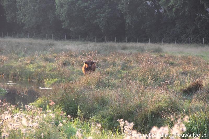 112 Kort:  koe te water aan Het Kleuvenveld in Assen