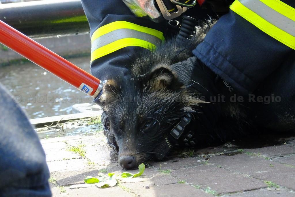 Brandweer Assen redt dier van Verdrinkingsdood