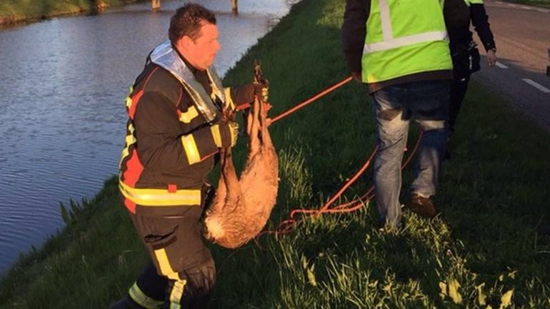 Brandweer Smilde redt ree uit kanaal