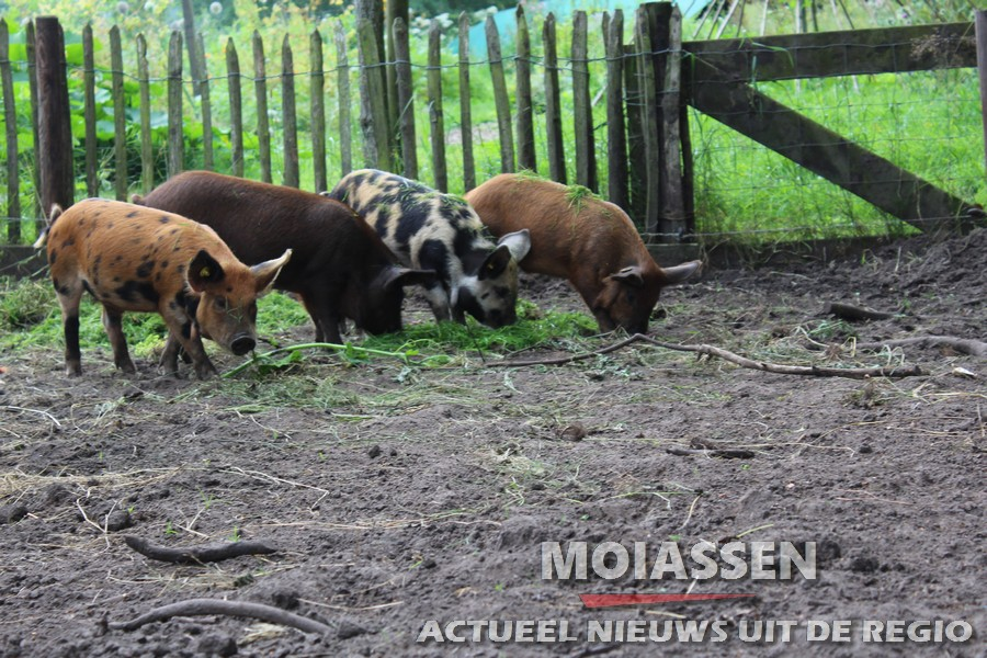 "De Groene Varkens 'Van Afval Naar Vlees"""