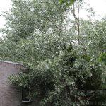 Boom valt op woning aan de Leemveld in de wijk Peelo Assen