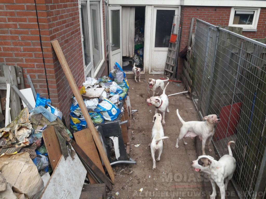 22 verwaarloosde honden in beslag genomen in Assen