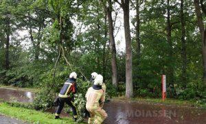 Diverse bomen waaide om in Assen door de eerste herfststorm