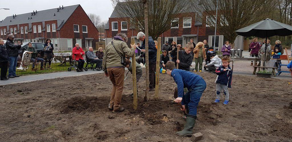 Nieuwe Prunus siert straathoek in de wijk Assen-Oost