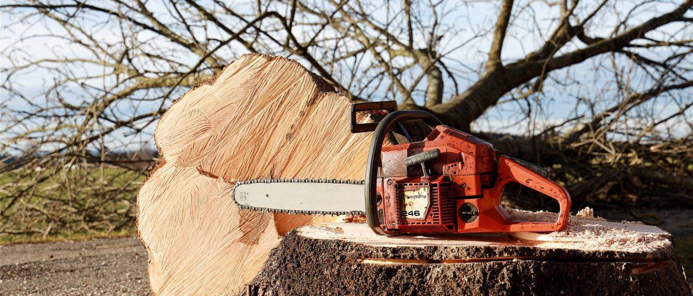 Kappen elf bomen Dennenweg