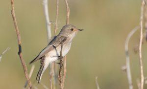 Voorjaarswandeling: Welkom zomervogels!
