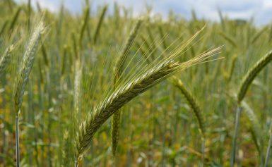 College Assen wil pacht landbouwgronden verduurzamen
