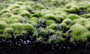 Subsidies regenton, groen dak en afkoppelen regenpijp gaan van start
